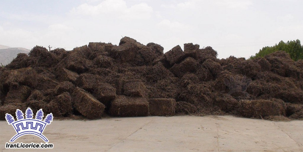 Iran Licorice Factory | Best Quality Licorice Products |Licorice Root | Sepidan Osareh Co.| www.IranLicorice.com