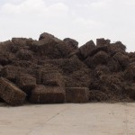 Licorice_Liquorice_Iran_Licorice_Root