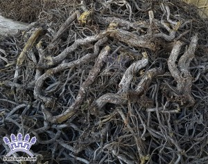 Licorice_Liquorice_Root_glabra